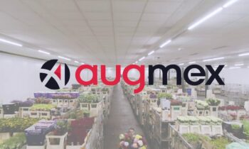 Augmex: AugPick Pick-by-Vision example in the floral industry